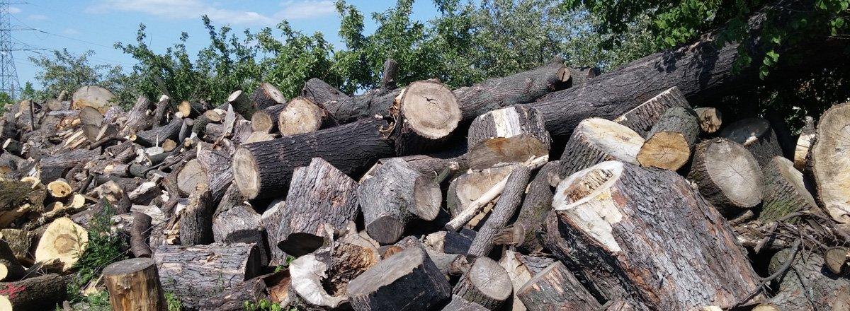Wycinka - Pocięte Drzewa